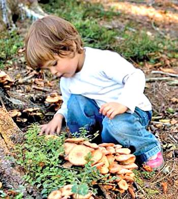 observation nature essay